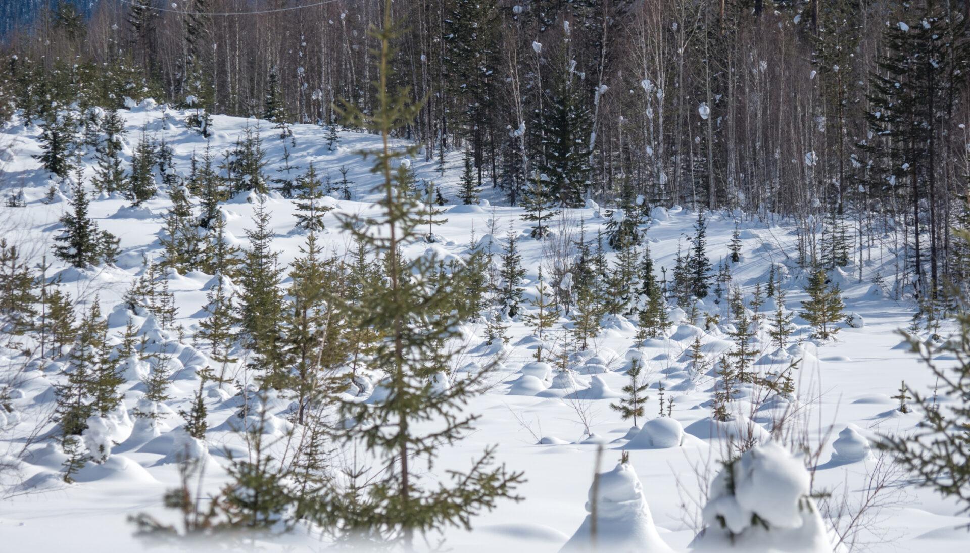 Чистый лед. Байкал 2018 (Часть 2) Северобайкальск