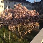 Линц за3 часа или Linz Donau Marathon 2017