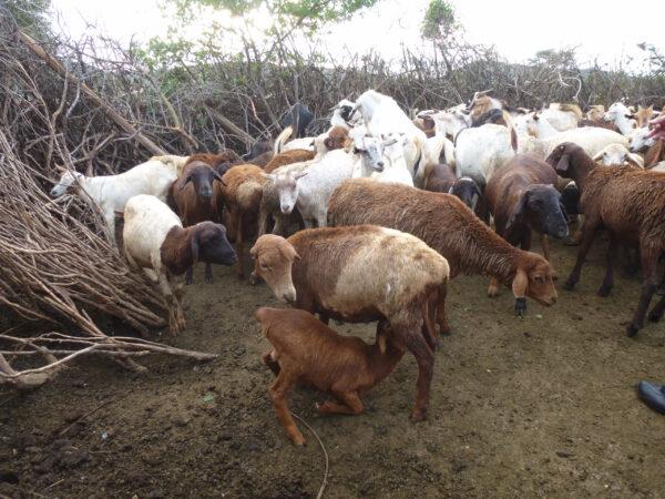 Кения Деревня Масаи впарке Масаи Мара