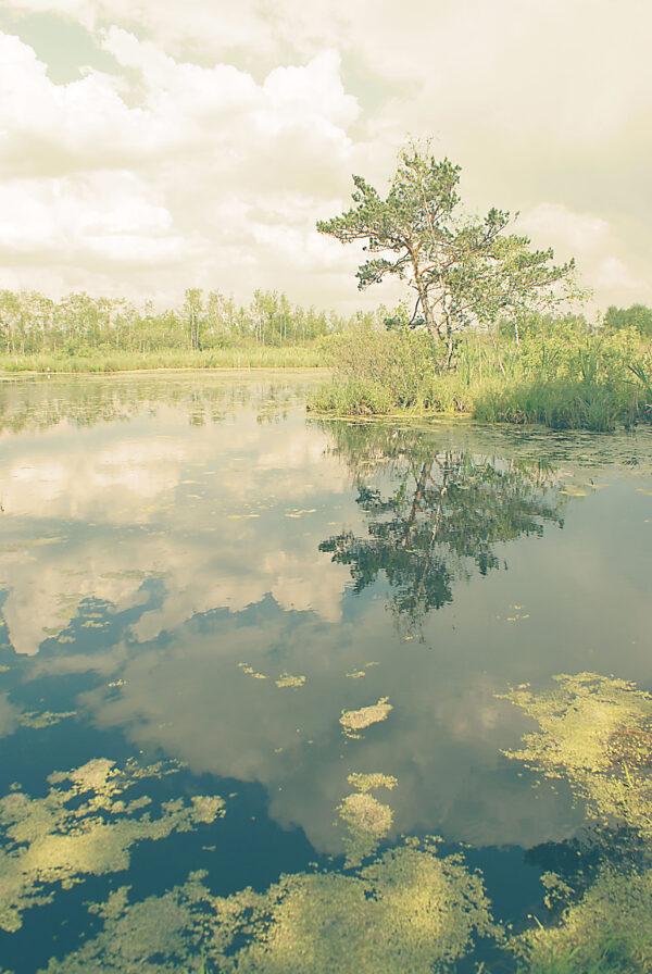 Прогулка потверским болотам