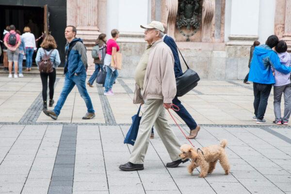 Собаки Мюнхена инетолько