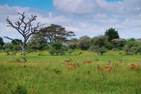 Танзания. Часть 1. Тарангири.