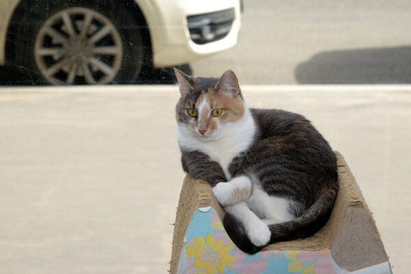 Котики илюди-антикафе.Часть 2.
