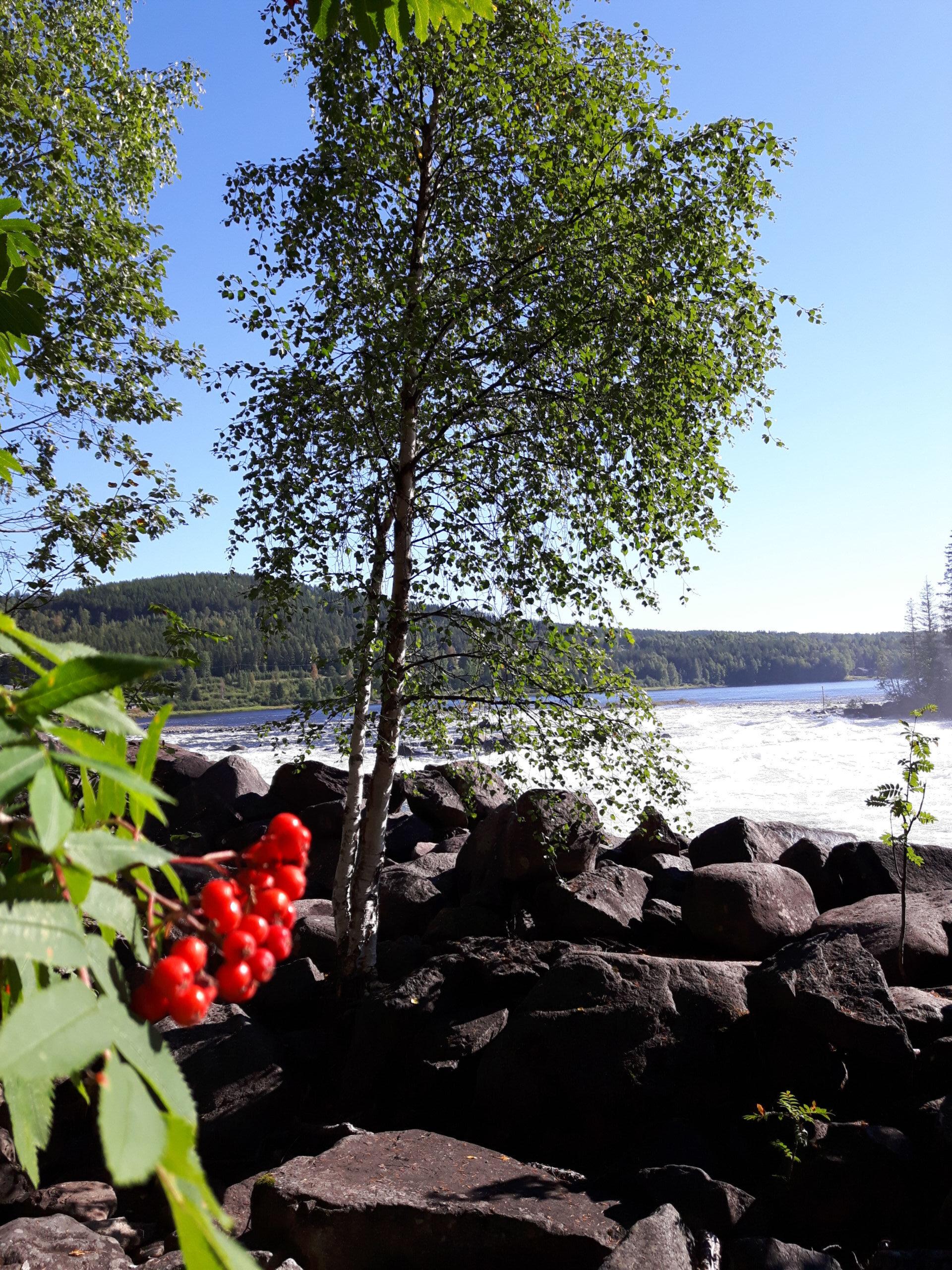 Лофотенские острова— часть 2— дорога домой. Швеция.