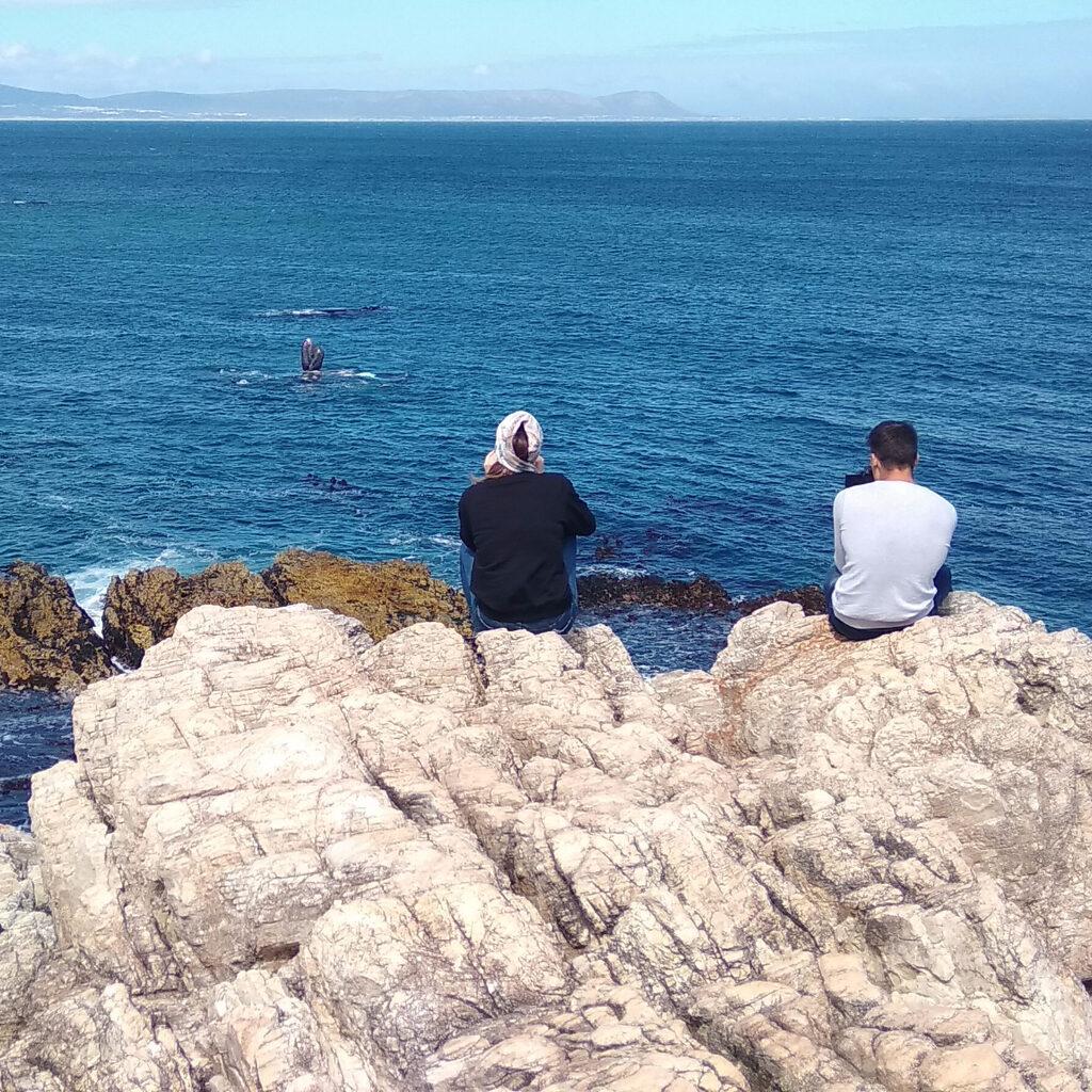 Увидеть кита и не умереть