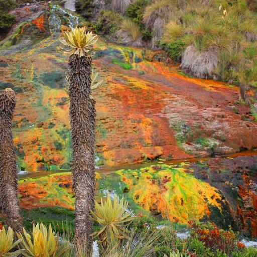 Цветотерапия на вулкане Руис.