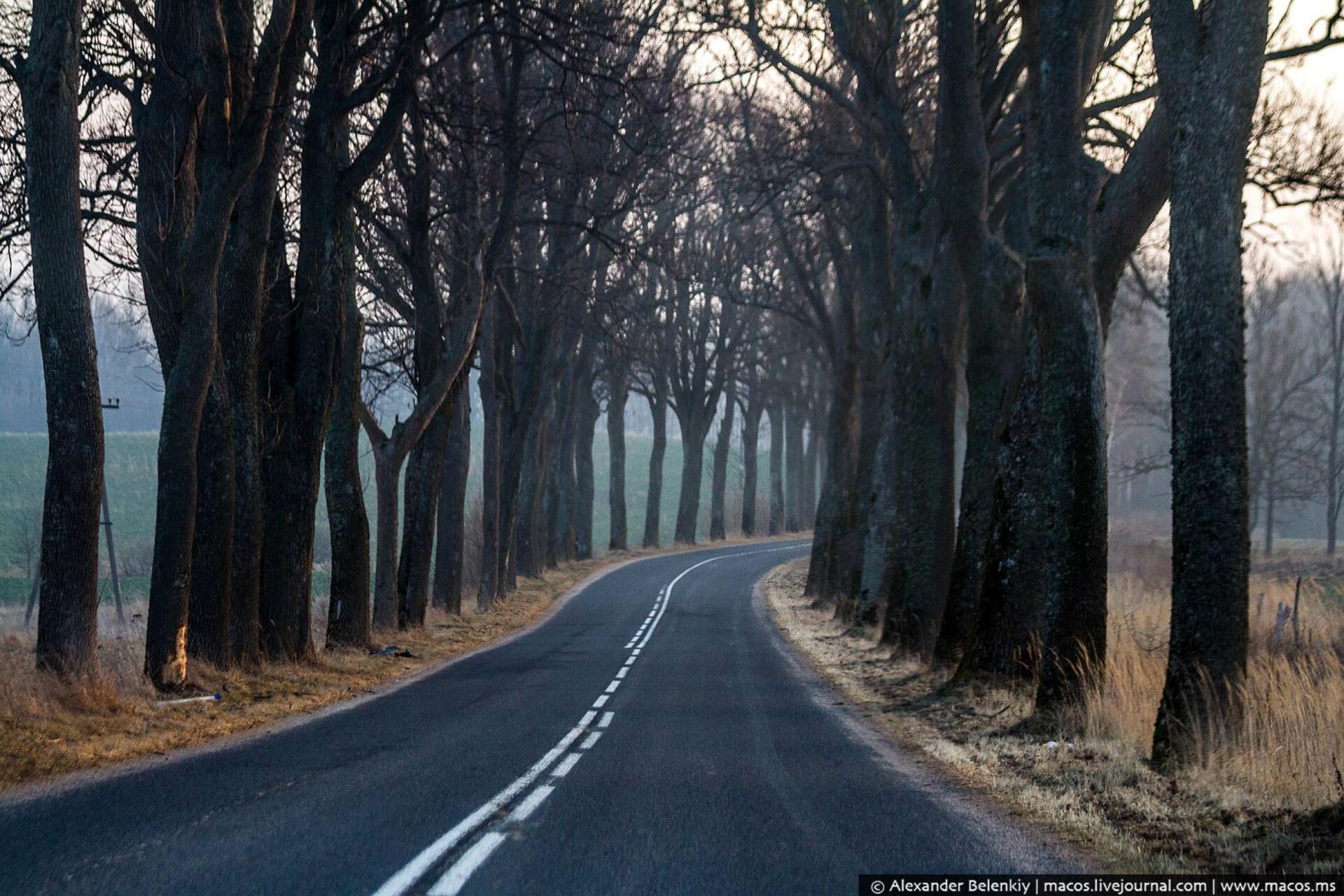 ряд деревьев с краю дороги