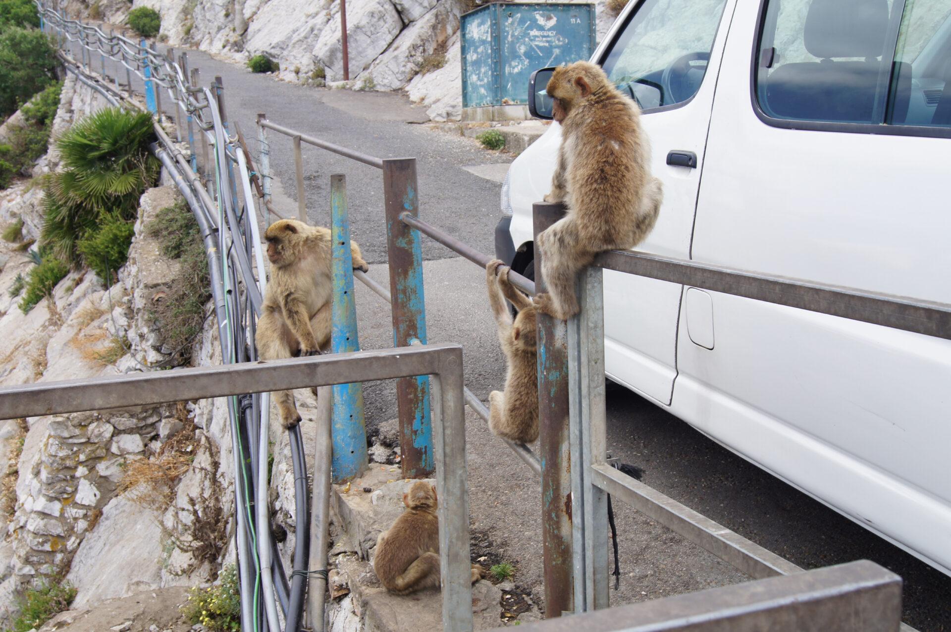 Вгости кмакакам Гибралтара