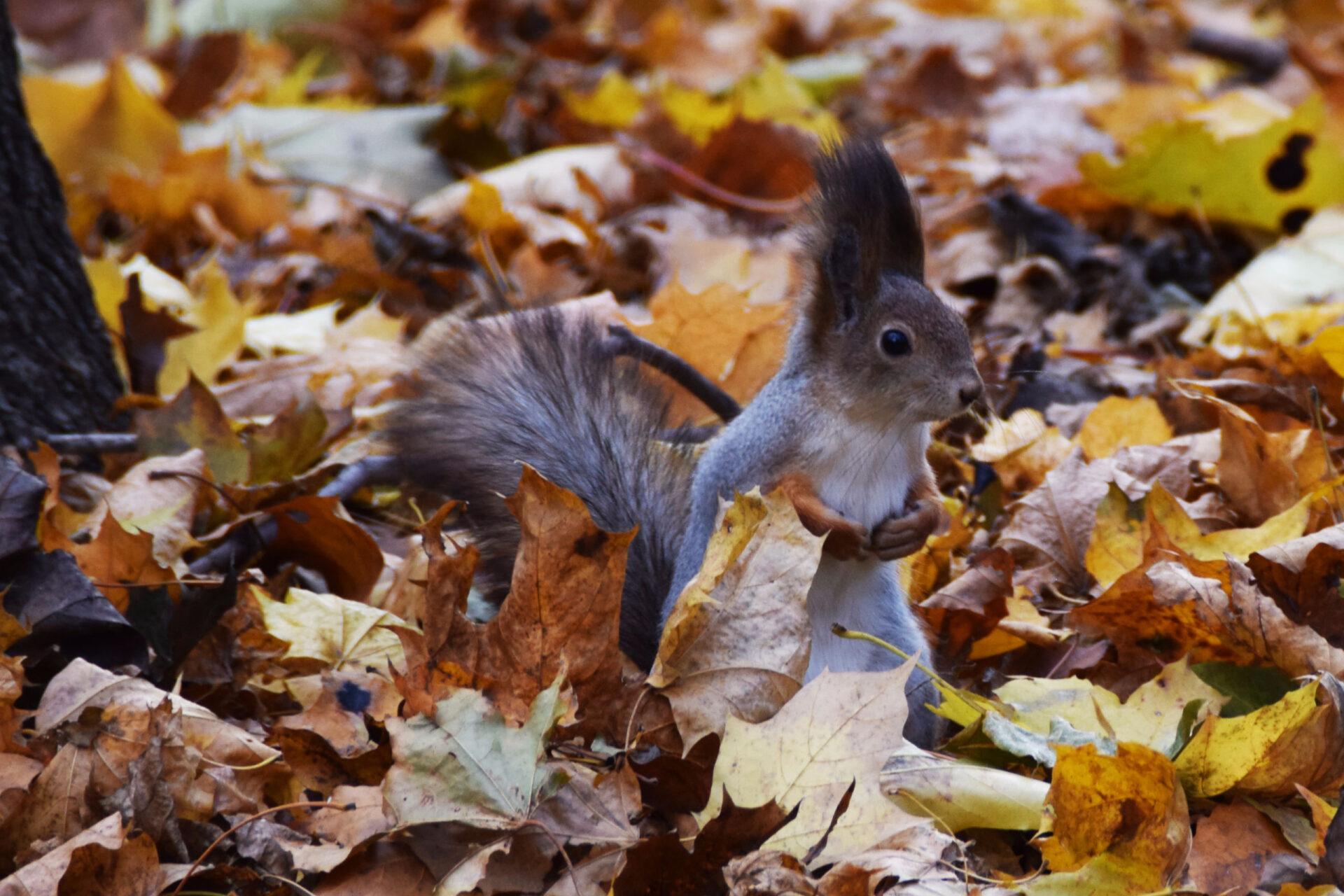 Золотая осень. Прогулка поНескучному саду, Андреевской иВоробьевской набережной.