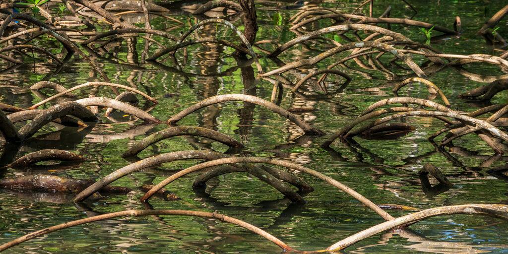 Доминикана. Мангровые леса