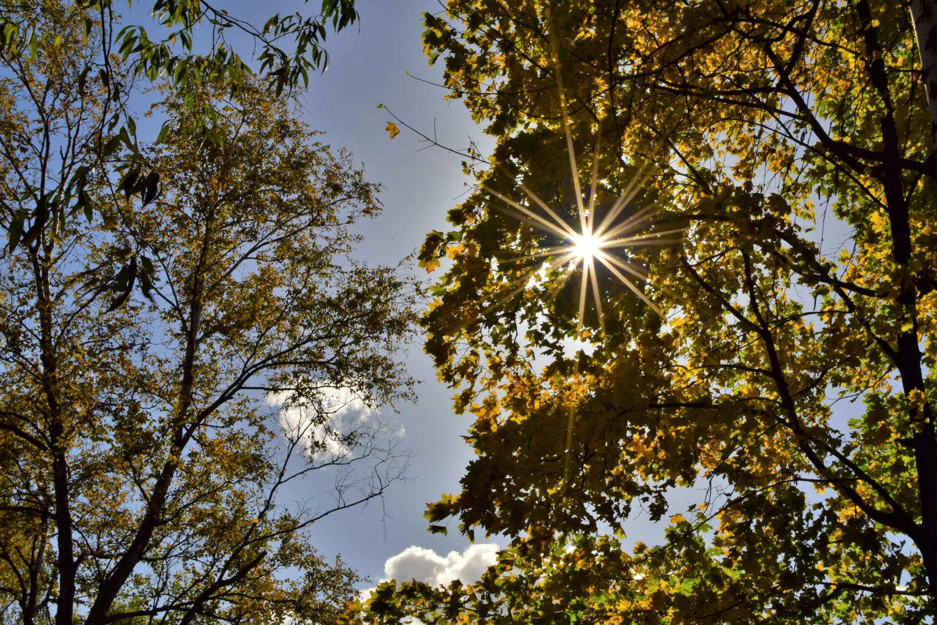 Осенний день вКосино