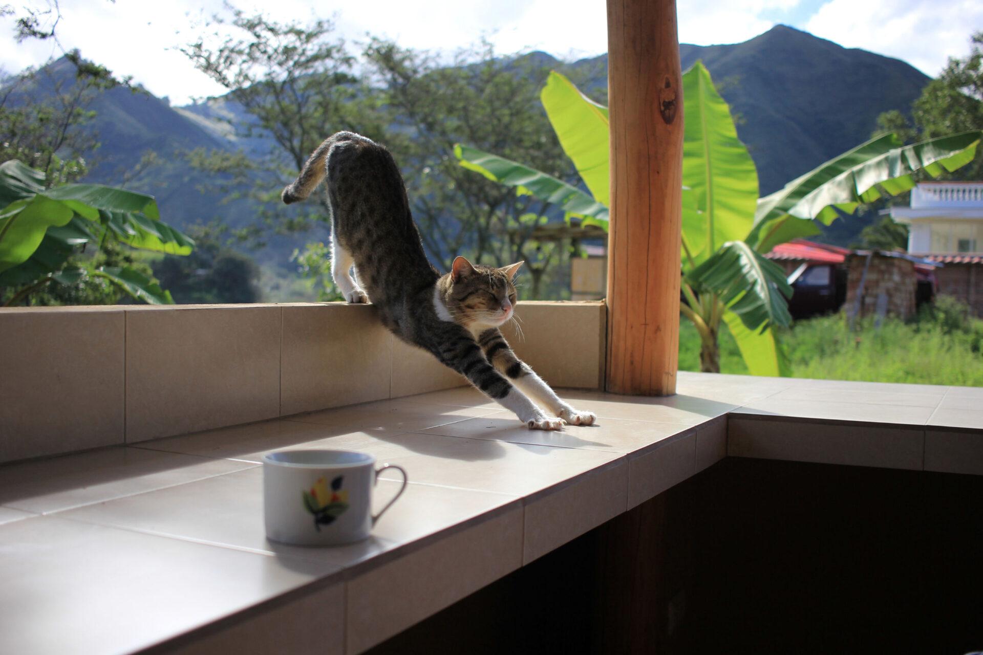 Вилькабамба. Эквадор